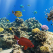 Stock Photo: Coral and fish