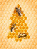Christmas tree frome honey cells with bees — Stock Photo