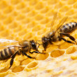 Macro of working bee on honeycells. — Stock Photo #36004593