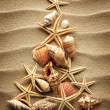 Sea shell on sand — Stock Photo #36004809
