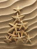 Coquillage sur le sable — Photo