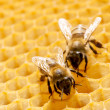 Stock Photo: Bees on honeycells.