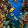 Coral and fish — Stock Photo #40035323