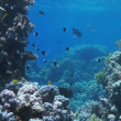 Stock Video: Coral and fish in Red Sea