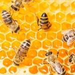 Macro of working bee on honeycells. — Stock Photo