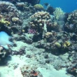 Coral and fish in the Red Sea — Stock Video