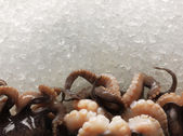 Raw and fresh octopus tentacles photographed on ice — Stock Photo