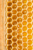 Honey cells. — Stock Photo