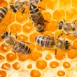Macro of working bee on honeycells. — Stock Photo #44034395