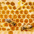 Macro of working bee on honeycells. — Stock Photo #44330943