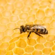 Macro of working bee on honeycells. — Stock Photo #44657757