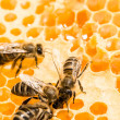 Macro of working bee on honeycells. — Stock Photo #45011295