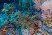 Corales y peces — Foto de Stock