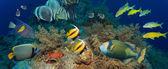 кораллы и рыбы — Стоковое фото