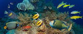 Coral and fish — Stock Photo