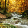 Forest waterfall — Stock Photo #47195869