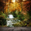 Forest waterfall — Stock Photo #48192381