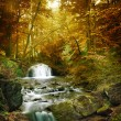 Forest waterfall — Stock Photo #48194193
