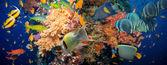 サンゴと魚 — ストック写真