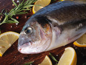 Raw dorado fish with rosemary — Foto Stock