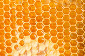 Honey cells. — Foto de Stock