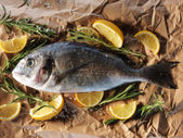 Raw dorado fish with rosemary — Stock Photo