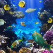 Coral colony and coral fish — Stock Photo #7543179