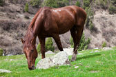 Horse eats the grass — Stock Photo