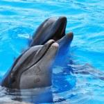 Dolphins — Stock Photo #26642255