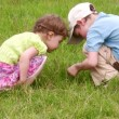 Stockvideo: Children explore bug