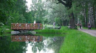 Brug op water in park — Stockvideo