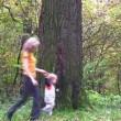 Stock Video: Family of four running around big tree. Autumn.