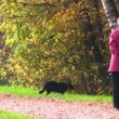 Senior woman with dog in autumnal park — Stock Video