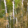 Stock Video: Autumn park reflection