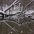 Branches covered by snow tree are lowered in water — Stock Video