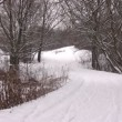 Snow on road in winter wood. Panorama — Stock Video