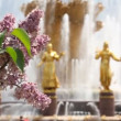 Lilac with the friendship fountain on background and focus shifting to the fountain — Stock Video