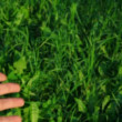 Stretching hand on green grass background — Stock Video