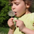 Girl blows flower on meadow — Stock Video