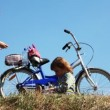 Stock Video: Boy and girl on field stay near bicycle play with toys and take photo form bag. time lapse