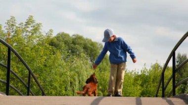 Malý chlapec krmení psa v parku — Stock video