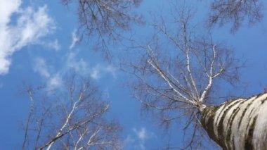 Treetop in blue sky — Stock Video