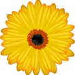 Gerbera floewer vector - Stock Vector