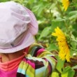 Stock Video: Girl observe yellow flowers with humble-bee sits on it through magnifying in summer