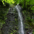 Waterfall in forest, panning downwards, sochi, russia — Stock Video