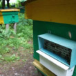 Bees with honey coming to beehive on apiary, camera moving up and back - Stock Photo