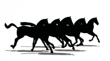 Run of small herd of horses, black silhouette on white background — Stock Video