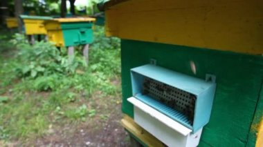 Bees with honey coming to beehive on apiary, camera moving up and back — Stock Video