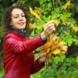 Young woman gathering maple leaves from tree in autumn park — Stock Video