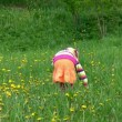 Little girl gathering field flowers in forest — Stock Video